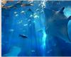【2連泊限定】美ら海水族館入館チケット付☆沖縄の海を丸ごと体感(朝食無し)